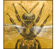 Bees gallery icon