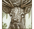 Myth gallery icon